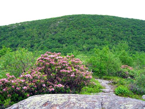 Mt Frissell from Round Top