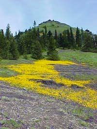 Wildflowers on Cone Peak,...