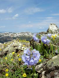 Wildflowers on the Tenmile...
