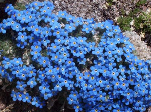 These are the tundra flowers...