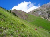 Lush alpine greenery heading...