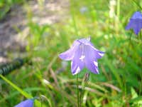Beautiful wild flowers are...