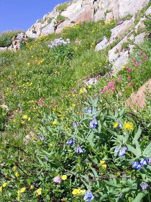 Many varieties of wildflowers...