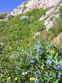 Many varieties of wildflowers...