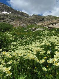 Lush wildflowers on the hike...