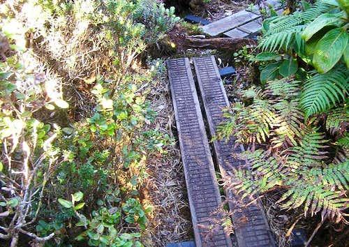 Mt Kaala Summit - Boardwalk...