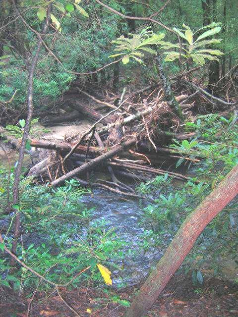 Log jam on one of the creeks....