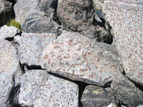 Trace marine fossils(?) in...