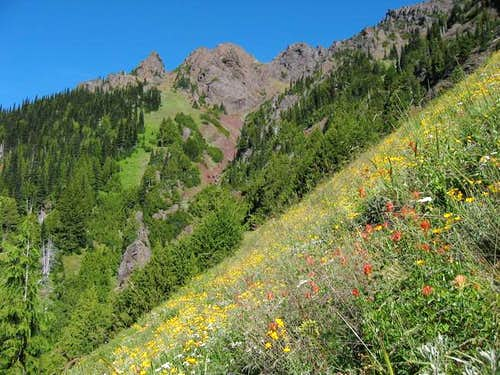 Wildflowers along Switchback...