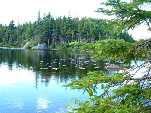The shore of Horns Pond.