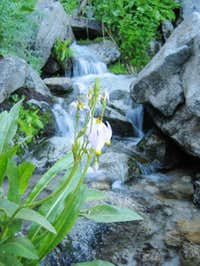 creek on Morion Mtn Trail