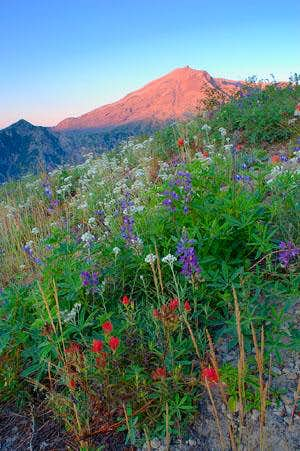 Wildflowers at Mount Saint...