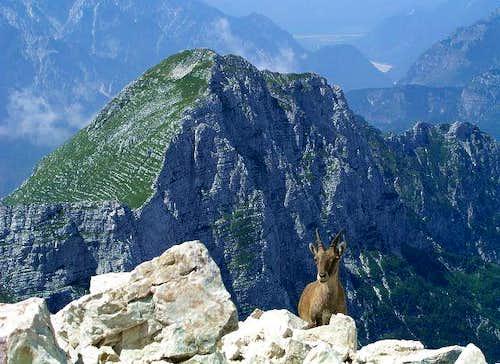 Strma pec / Monte Cimone from...