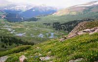 wildflowers on Mt. Bierstadt...