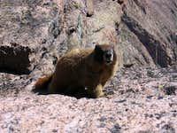 Damn marmot won't leave us...