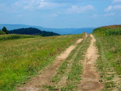 High elevation cornfield on...