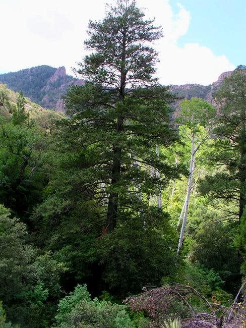 Basset Peak hike on May 26,...