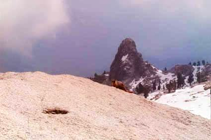 A hungry marmot at the summit...