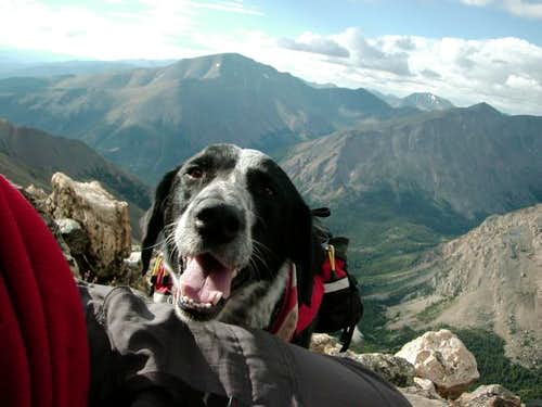 Dog friendly mountain. Trail...