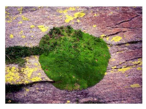 The Monte Rosa's plant - a...