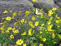 Pair of Monarch Butterflies...
