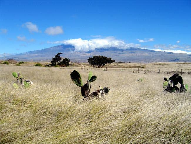 Mauna Kea's summit shrouded...