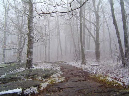 Here\'s the trail on a foggy...