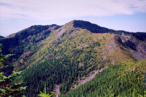 The NNE ridge of Bluff Mt....