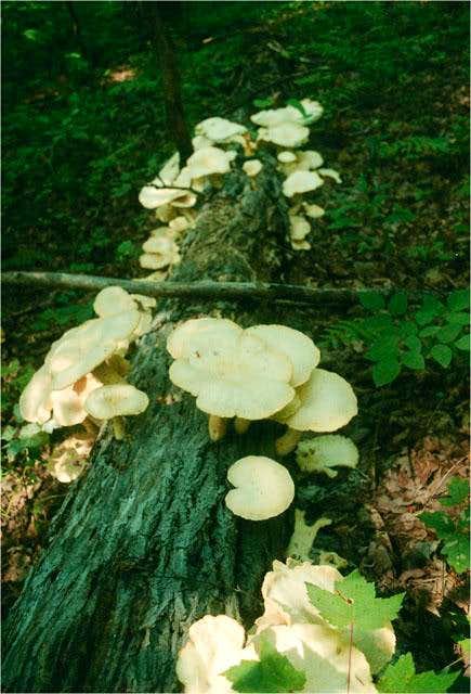 Mushrooms grow in abundance...