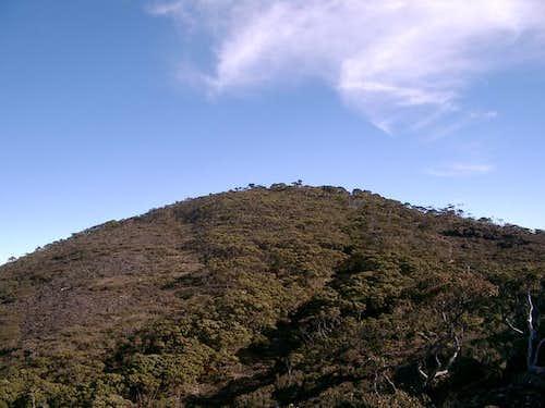 Gunung Rantemario (Mount Latimojong)