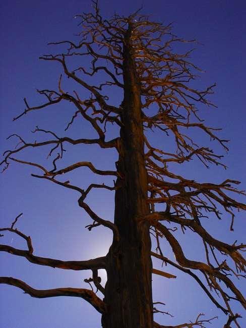 Beauty in death, a tree along...