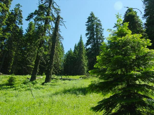 Meadow along the trail to...