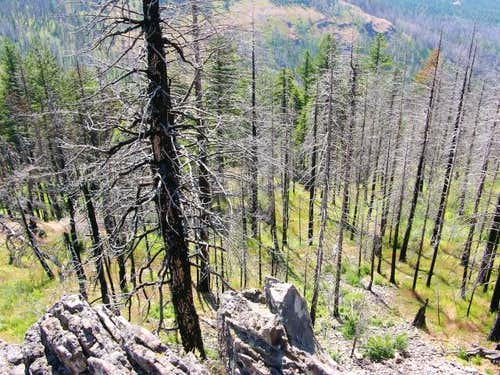 Burnt remains from the 2002...