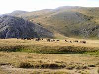 Wild horses on Bistra...