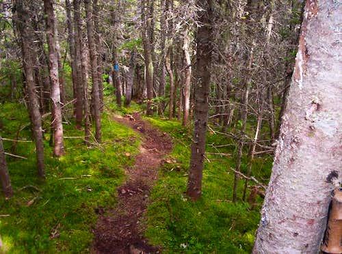 Traveler Mountain Trail