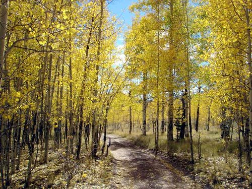 Aspen forest just below the...