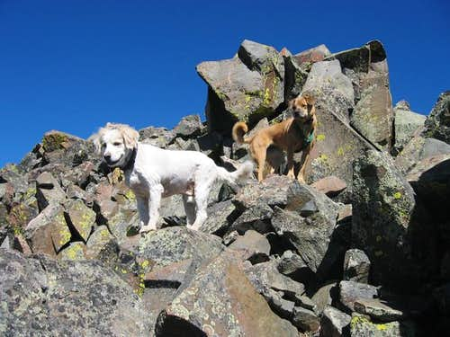 My dogs Raymond and Sopris on...