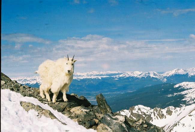 Near the summit on Torreys...