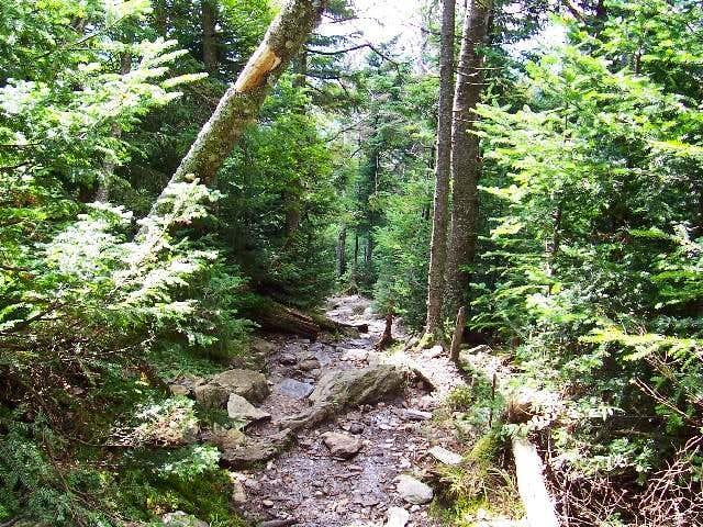 Burrows Trail.