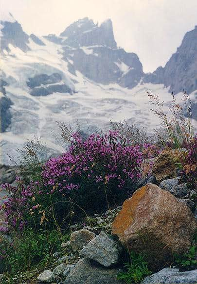 Flowers near the glacier....