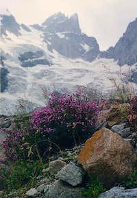 Flowers near the glacier....