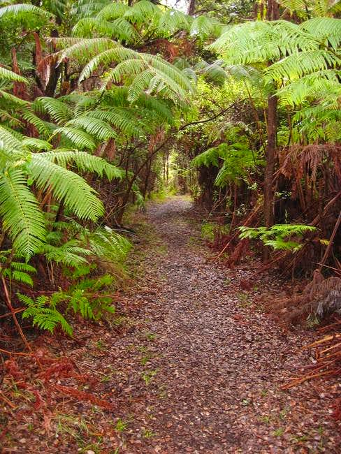 Part of the Napau Trail as it...