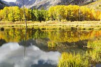 Aspens over lake in Lundy...