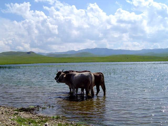 What's this? Tibet, Mongolia..., or just Durmitor...