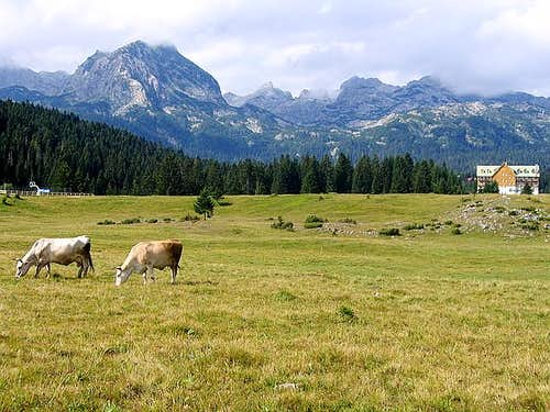 Alpine scenery of Mt Durmitor...