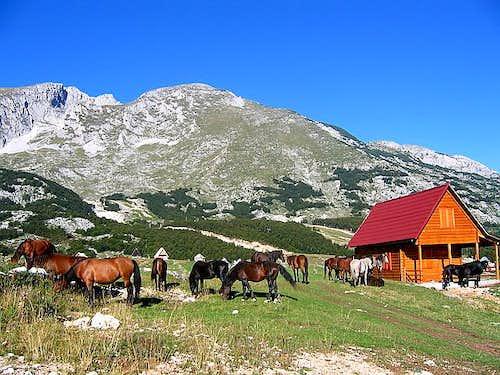 Horses belowe Savin Kuk (2313...