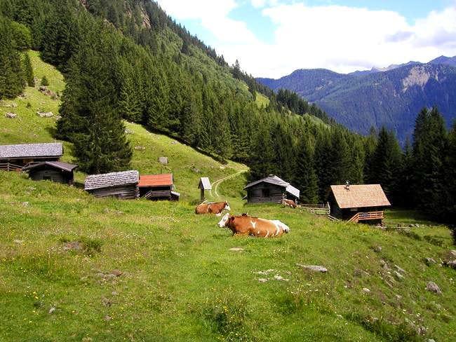 The meadow Wangenitz Alm...