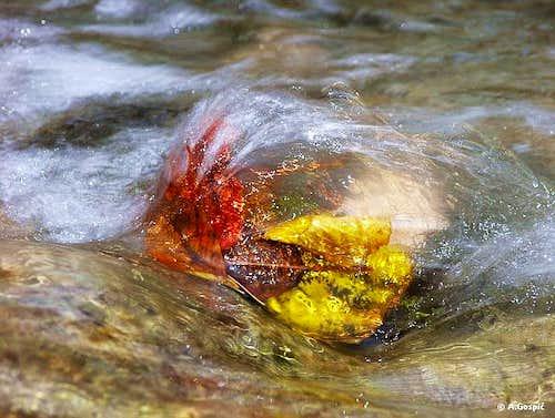 Strugle in the stream