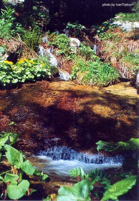 A stream flowing through the...