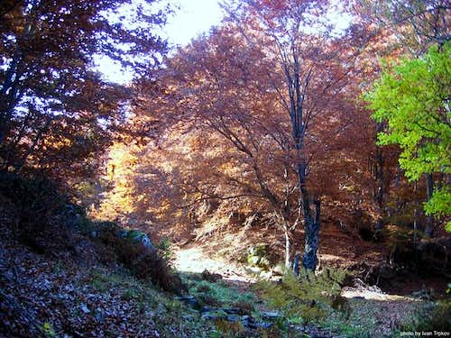 Beech forest on Neolica massif
